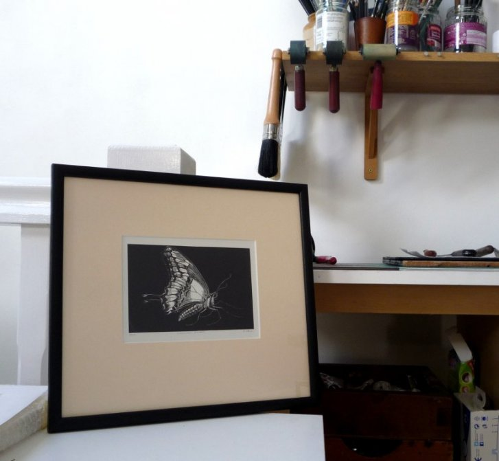 Swallowtail Butterfly (framed)
